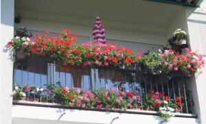 Concours jardins et balcons fleuris 2020
