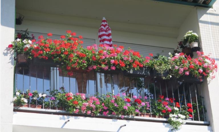 Concours jardins et balcons fleuris Mourenx